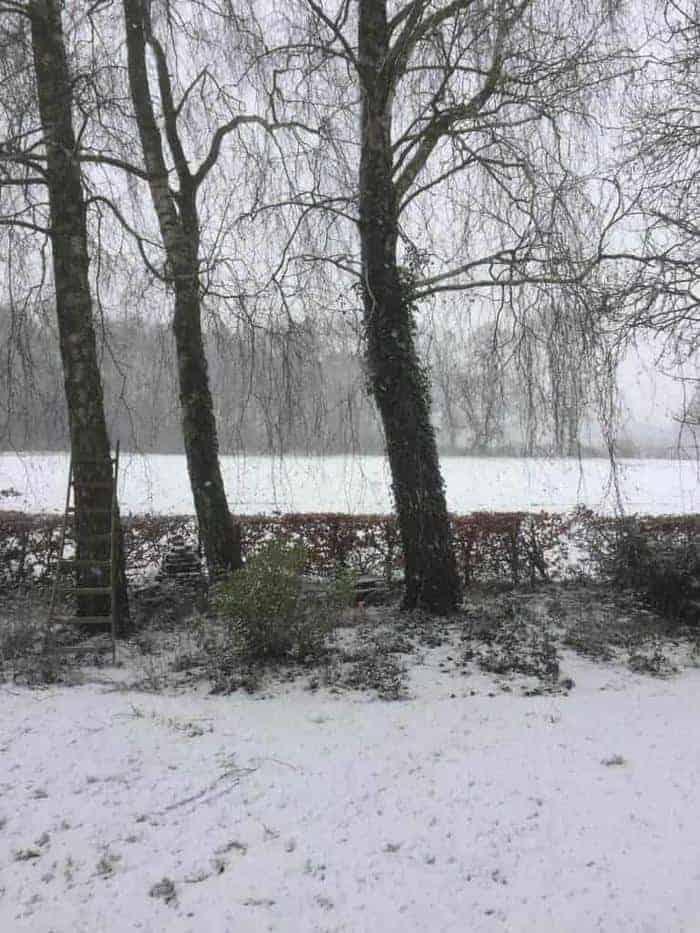 sneeuwvrij